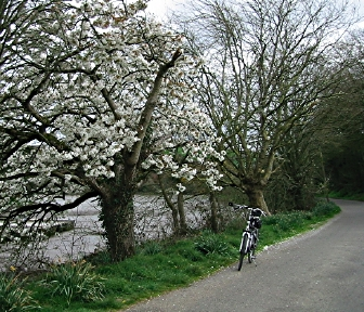 bicycling and walking essay